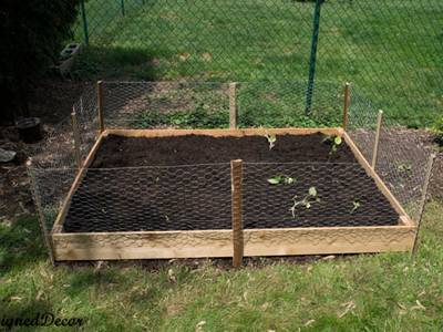The chicken wire is surrounding the seedling bed.